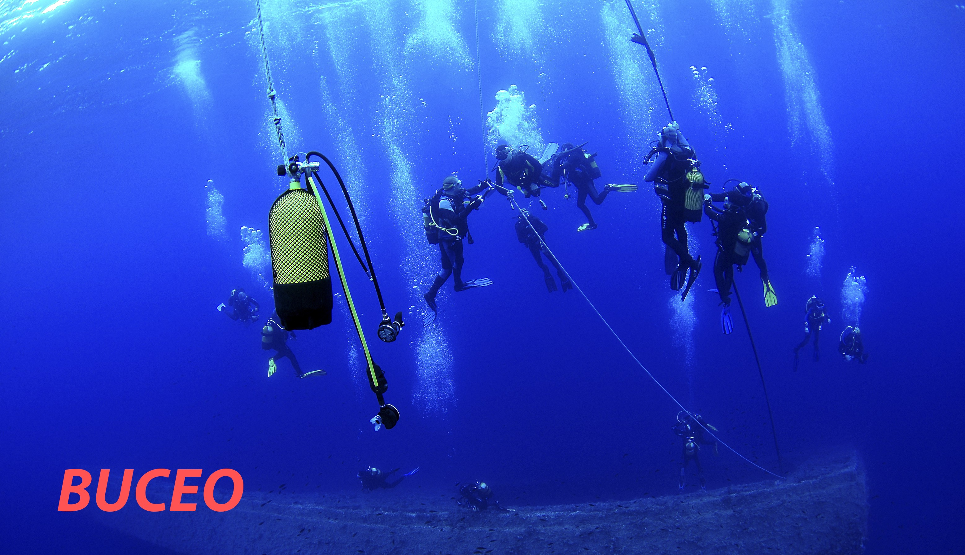 BUCEO-1